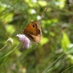 farfallina bella