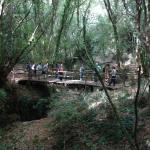 il nostro ponte