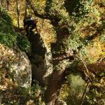 2006-11-19_13-47-54_[Matteo]